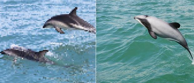 21 bức ảnh động vật hoang dã bị làm mờ: Tưởng ảnh hỏng nhưng lại mang thông điệp ý nghĩa phía sau khiến chúng ta phải bất ngờ - Ảnh 11.