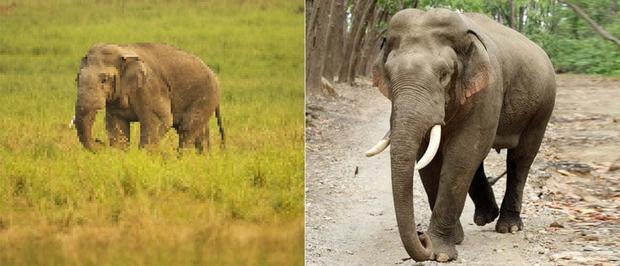 21 bức ảnh động vật hoang dã bị làm mờ: Tưởng ảnh hỏng nhưng lại mang thông điệp ý nghĩa phía sau khiến chúng ta phải bất ngờ - Ảnh 16.