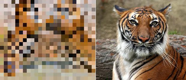 21 bức ảnh động vật hoang dã bị làm mờ: Tưởng ảnh hỏng nhưng lại mang thông điệp ý nghĩa phía sau khiến chúng ta phải bất ngờ - Ảnh 15.