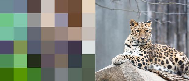 21 bức ảnh động vật hoang dã bị làm mờ: Tưởng ảnh hỏng nhưng lại mang thông điệp ý nghĩa phía sau khiến chúng ta phải bất ngờ - Ảnh 14.