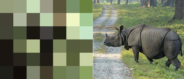 21 bức ảnh động vật hoang dã bị làm mờ: Tưởng ảnh hỏng nhưng lại mang thông điệp ý nghĩa phía sau khiến chúng ta phải bất ngờ - Ảnh 10.