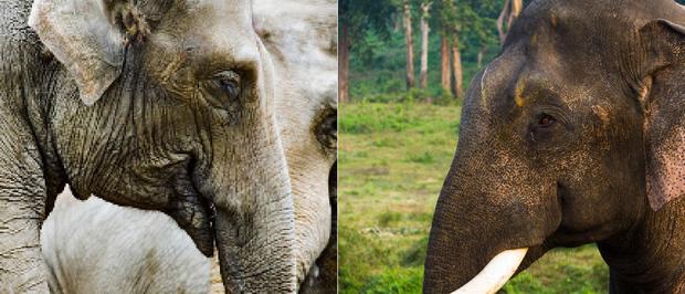 21 bức ảnh động vật hoang dã bị làm mờ: Tưởng ảnh hỏng nhưng lại mang thông điệp ý nghĩa phía sau khiến chúng ta phải bất ngờ - Ảnh 18.