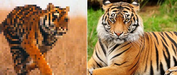 21 bức ảnh động vật hoang dã bị làm mờ: Tưởng ảnh hỏng nhưng lại mang thông điệp ý nghĩa phía sau khiến chúng ta phải bất ngờ - Ảnh 9.