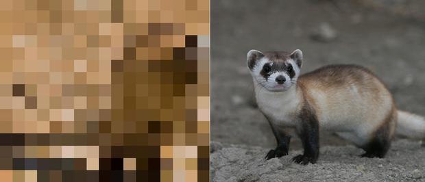 21 bức ảnh động vật hoang dã bị làm mờ: Tưởng ảnh hỏng nhưng lại mang thông điệp ý nghĩa phía sau khiến chúng ta phải bất ngờ - Ảnh 13.