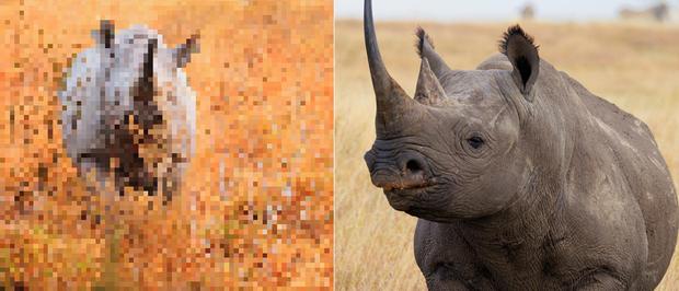 21 bức ảnh động vật hoang dã bị làm mờ: Tưởng ảnh hỏng nhưng lại mang thông điệp ý nghĩa phía sau khiến chúng ta phải bất ngờ - Ảnh 21.