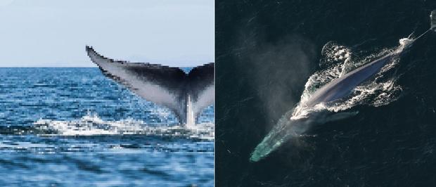 21 bức ảnh động vật hoang dã bị làm mờ: Tưởng ảnh hỏng nhưng lại mang thông điệp ý nghĩa phía sau khiến chúng ta phải bất ngờ - Ảnh 20.