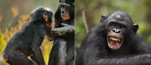 21 bức ảnh động vật hoang dã bị làm mờ: Tưởng ảnh hỏng nhưng lại mang thông điệp ý nghĩa phía sau khiến chúng ta phải bất ngờ - Ảnh 5.