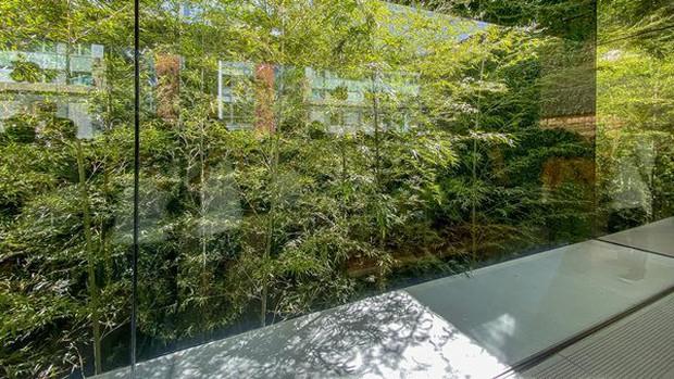 Lạ lùng với Apple Store mới toanh đậm chất Nhật Bản: Thiết kế cây nhà lá vườn chưa từng có trên thế giới - Ảnh 1.