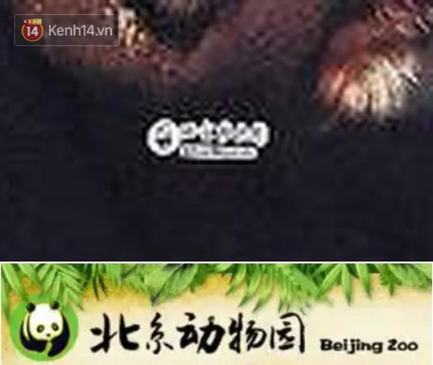Lụa đẹp vì người: Jackson (GOT7) diện áo phông lưu niệm bán ở sở thú mà trông xịn sò như đồ hiệu - Ảnh 5.