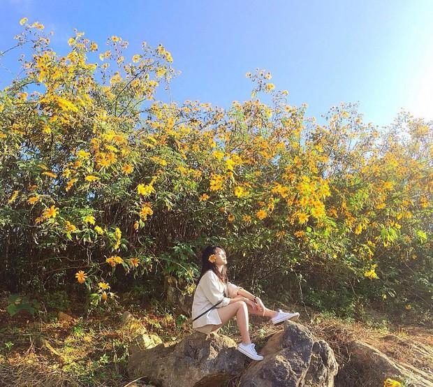 """Rực rỡ khắp newsfeed 9 cung đường săn hoa dã quỳ đẹp nhất Đà Lạt: Ơn giời, """"mùa vàng"""" của hội sống ảo đây rồi! - Ảnh 12."""