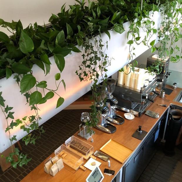 Muốn ăn ảnh ở Seoul thì nhất định phải đến 5 quán café dưới đây để check in mà sống ảo này - Ảnh 14.