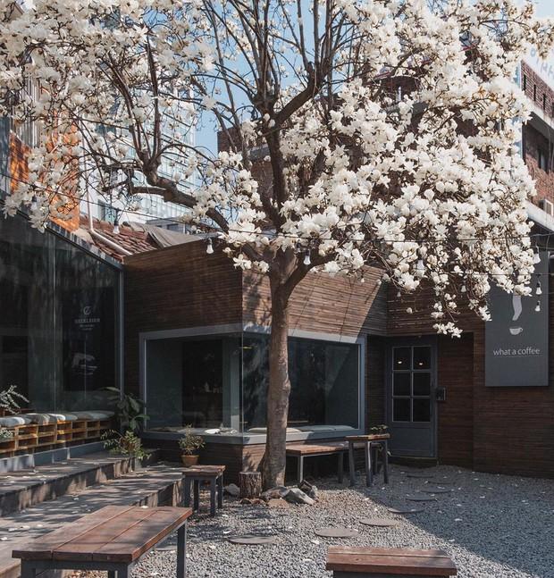 Muốn ăn ảnh ở Seoul thì nhất định phải đến 5 quán café dưới đây để check in mà sống ảo này - Ảnh 6.