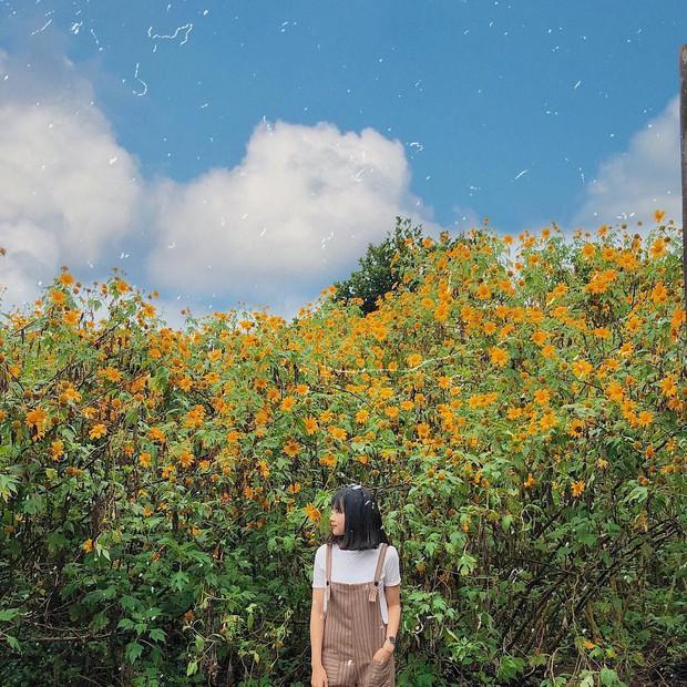 """Rực rỡ khắp newsfeed 9 cung đường săn hoa dã quỳ đẹp nhất Đà Lạt: Ơn giời, """"mùa vàng"""" của hội sống ảo đây rồi! - Ảnh 10."""