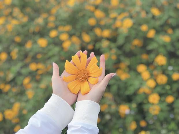 """Rực rỡ khắp newsfeed 9 cung đường săn hoa dã quỳ đẹp nhất Đà Lạt: Ơn giời, """"mùa vàng"""" của hội sống ảo đây rồi! - Ảnh 5."""