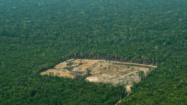 Trước khi cháy kỷ lục xảy ra, rừng Amazon đã kiên cường chống trả sự xâm lấn của con người chỉ nhờ một chiến binh tí hon - Ảnh 1.