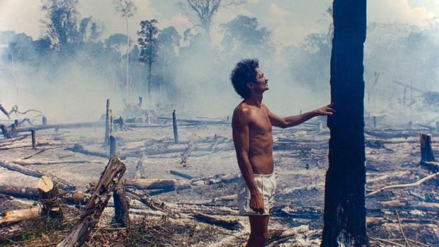 Trước khi cháy kỷ lục xảy ra, rừng Amazon đã kiên cường chống trả sự xâm lấn của con người chỉ nhờ một chiến binh tí hon - Ảnh 3.