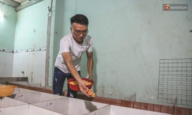 Chàng sinh viên Sài Gòn thu nhập 40 triệu đồng/tháng nhờ nuôi dúi bằng máy lạnh - Ảnh 4.