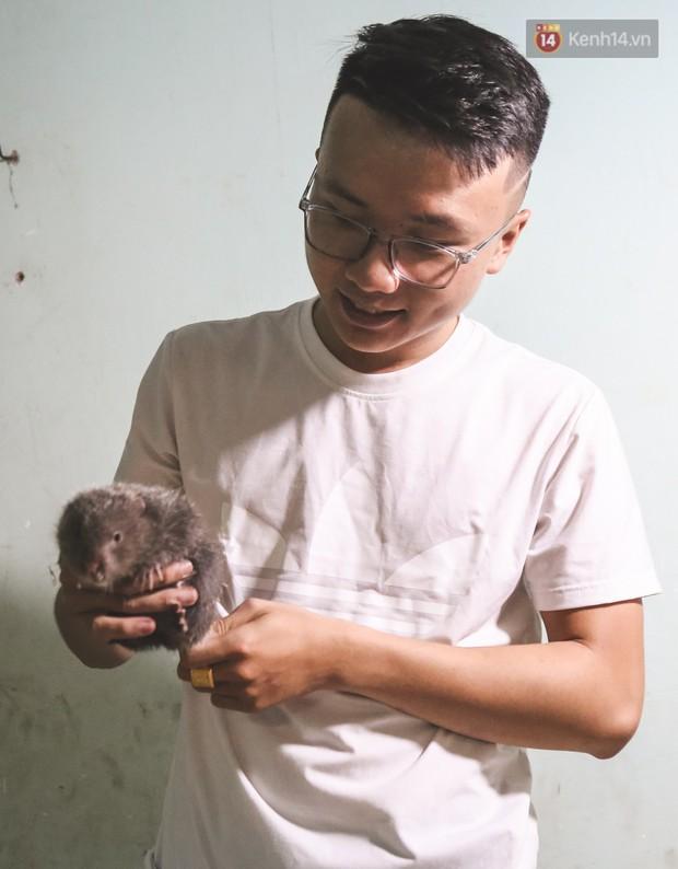 Chàng sinh viên Sài Gòn thu nhập 40 triệu đồng/tháng nhờ nuôi dúi bằng máy lạnh - Ảnh 6.