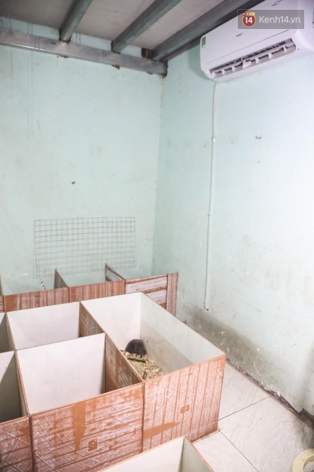 Chàng sinh viên Sài Gòn thu nhập 40 triệu đồng/tháng nhờ nuôi dúi bằng máy lạnh - Ảnh 5.