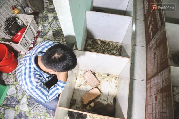 Chàng sinh viên Sài Gòn thu nhập 40 triệu đồng/tháng nhờ nuôi dúi bằng máy lạnh - Ảnh 10.