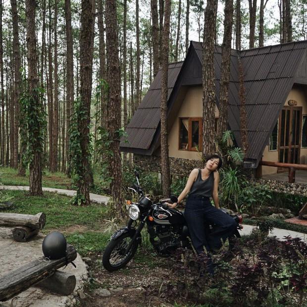 Resort mới toanh nằm giữa rừng thông đang siêu hot ở Chiangmai (Thái), rất hợp cho những ai ôm mộng trốn cả thế giới mùa thu này  - Ảnh 1.