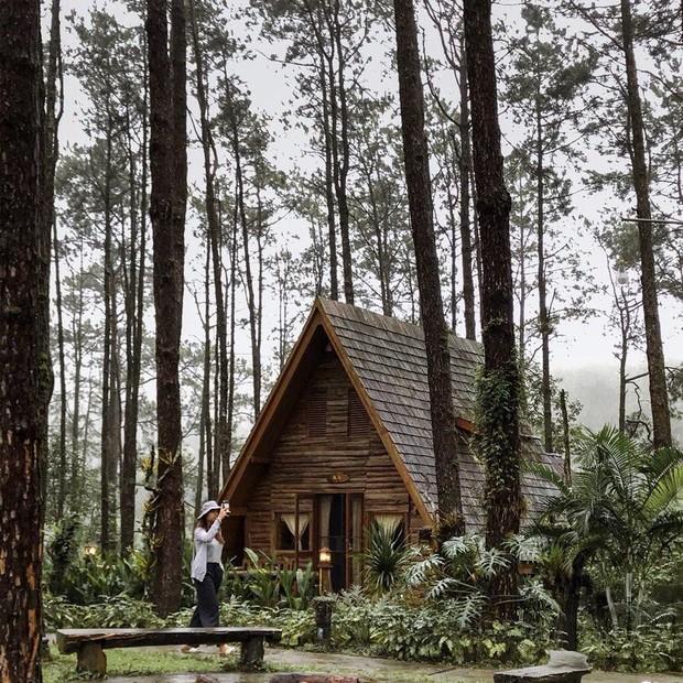 Resort mới toanh nằm giữa rừng thông đang siêu hot ở Chiangmai (Thái), rất hợp cho những ai ôm mộng trốn cả thế giới mùa thu này  - Ảnh 2.