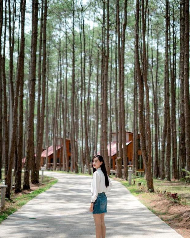 Resort mới toanh nằm giữa rừng thông đang siêu hot ở Chiangmai (Thái), rất hợp cho những ai ôm mộng trốn cả thế giới mùa thu này  - Ảnh 15.