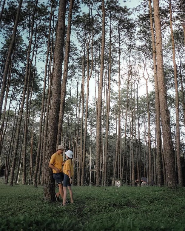 Resort mới toanh nằm giữa rừng thông đang siêu hot ở Chiangmai (Thái), rất hợp cho những ai ôm mộng trốn cả thế giới mùa thu này  - Ảnh 22.