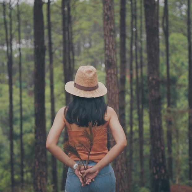 Resort mới toanh nằm giữa rừng thông đang siêu hot ở Chiangmai (Thái), rất hợp cho những ai ôm mộng trốn cả thế giới mùa thu này  - Ảnh 5.