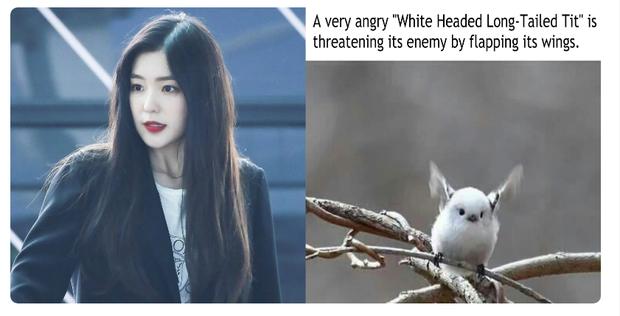 Sau 5 năm debut, các thành viên Red Velvet ai nấy đều lột xác: Irene ngày càng hack tuổi khó tin, vitamin Joy sexy bất ngờ - Ảnh 4.