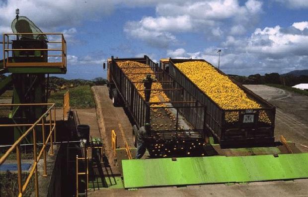 ĐH Princeton mở deal hot cho công ty hoa quả đổ rác thoải mái trên cánh rừng chết, 15 năm sau đem lại kết quả khiến ai cũng ngỡ ngàng - Ảnh 1.