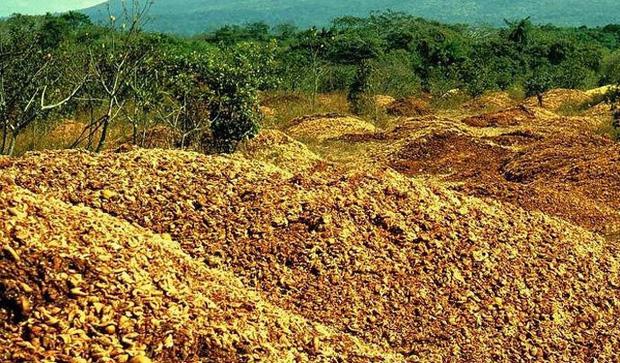ĐH Princeton mở deal hot cho công ty hoa quả đổ rác thoải mái trên cánh rừng chết, 15 năm sau đem lại kết quả khiến ai cũng ngỡ ngàng - Ảnh 2.