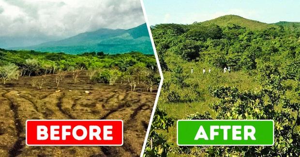 ĐH Princeton mở deal hot cho công ty hoa quả đổ rác thoải mái trên cánh rừng chết, 15 năm sau đem lại kết quả khiến ai cũng ngỡ ngàng - Ảnh 4.