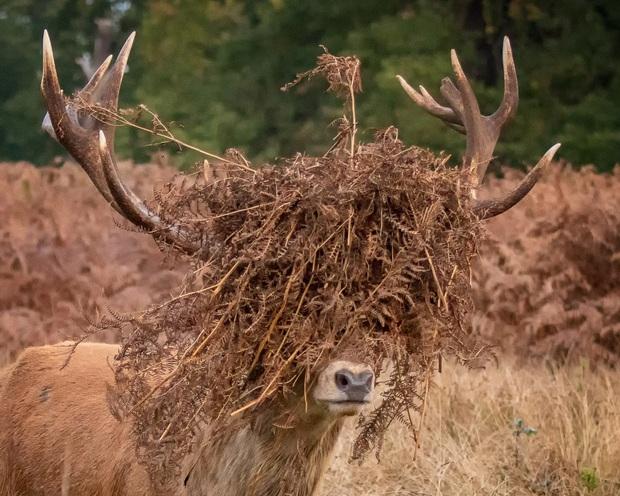 Loạt ảnh mệt phờ râu ngày đầu năm sau một đêm quẩy quá đà của các loài động vật khiến ai nấy đều cười bò - Ảnh 6.