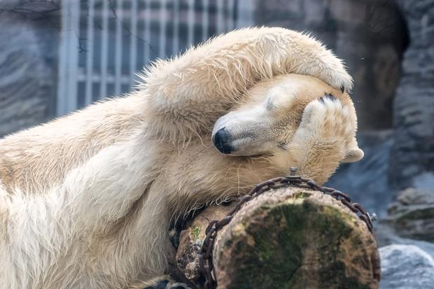 Loạt ảnh mệt phờ râu ngày đầu năm sau một đêm quẩy quá đà của các loài động vật khiến ai nấy đều cười bò - Ảnh 9.