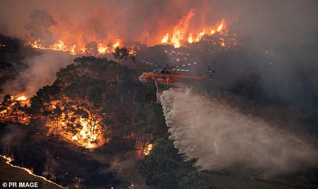 Một người đàn ông nghi là gốc Việt bị cảnh sát Úc bắt giữ vì cố ý phóng hỏa gây cháy rừng khiến dư luận bức xúc - Ảnh 2.