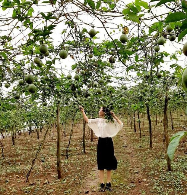 Bỏ công việc thu nhập cao ngất ngưởng, cô giáo Hà Nội sở hữu trung tâm tiếng Anh về quê ủ phân trồng rau: Cuộc sống mà Đen Vâu mơ ước là đây chứ đâu! - Ảnh 6.