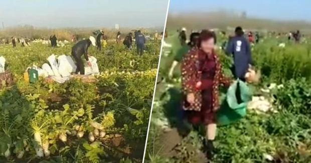 Biếu hàng xóm một túi củ cải ngon, ai ngờ bác nông dân tự tay ném gần 1 tỷ đồng qua cửa sổ  - Ảnh 2.