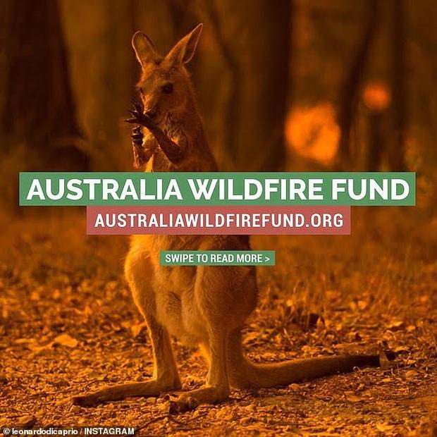 """Thor Chris Hemsworth đã khủng, tài tử """"Titanic"""" Leonardo còn khủng hơn: Lập quỹ cứu trợ đại thảm hoạ cháy rừng Úc với số tiền không tưởng - Ảnh 2."""