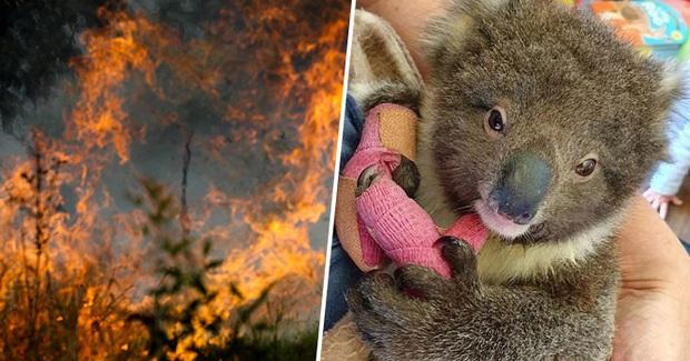 Choáng váng: WWF dự đoán hơn MỘT TỈ sinh vật có thể đã chết vì vụ cháy rừng đại thảm họa của Úc, và đó chưa phải con số cuối cùng - Ảnh 3.