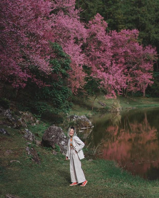 Đầu năm mới, sao không một lần chơi lớn sang hẳn Thái Lan ngắm rừng hoa anh đào đẹp như trong phim ngôn tình - Ảnh 4.
