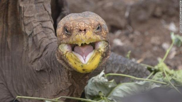 Cụ rùa trăm tuổi nghỉ hưu sau 43 năm miệt mài phối giống cứu cả loài khỏi tuyệt chủng, làm cha của hơn 800 đứa con - Ảnh 3.