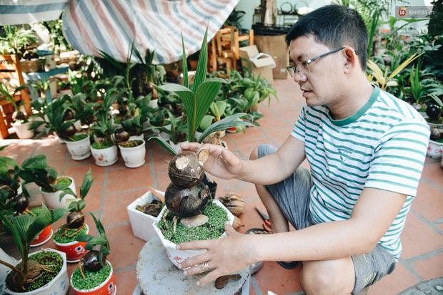 Dừa hình con chuột độc đáo ở Sài Gòn giá gần 1 triệu đồng, khách nườm nượp đặt hàng dịp Tết Canh Tý 2020 - Ảnh 1.