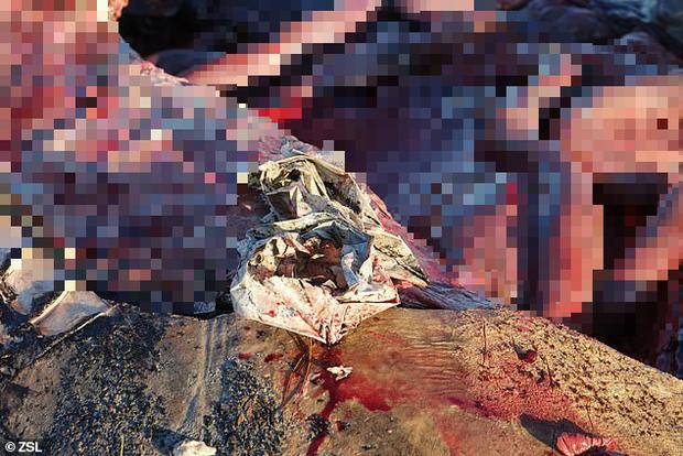 Cá voi sát thủ dạt vào đầm lầy tại Anh lần đầu tiên sau 19 năm: Cả một bụng rỗng tuếch thức ăn nhưng chất đầy rác nhựa - Ảnh 3.