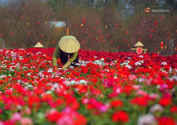 Vườn đào xuân 1000 gốc khoe sắc trong khuôn viên đại học VinUni vừa khánh thành - Ảnh 7.