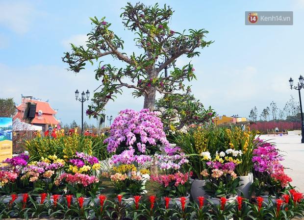 Vườn đào xuân 1000 gốc khoe sắc trong khuôn viên đại học VinUni vừa khánh thành - Ảnh 8.