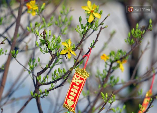 Vườn đào xuân 1000 gốc khoe sắc trong khuôn viên đại học VinUni vừa khánh thành - Ảnh 5.