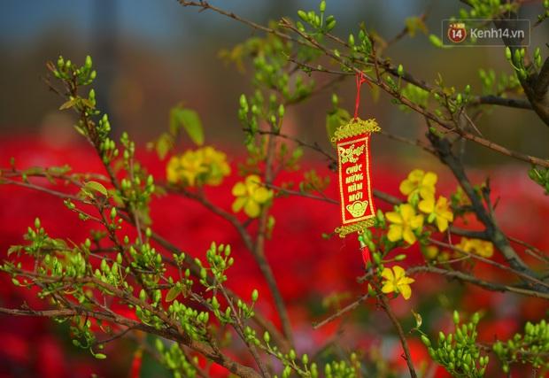 Vườn đào xuân 1000 gốc khoe sắc trong khuôn viên đại học VinUni vừa khánh thành - Ảnh 6.