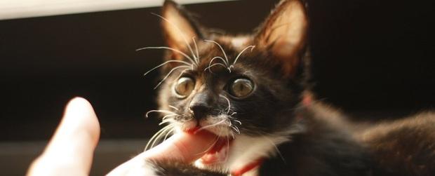 Mèo nhà gặm xác người: Tưởng là chuyện kinh dị nhưng có thật và khoa học mới tiết lộ quá trình này diễn ra như thế nào - Ảnh 1.
