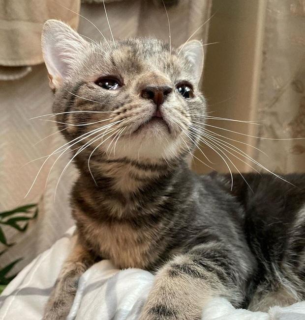 Không chỉ riêng con người, mèo cũng bị mắc hội chứng Down - Ảnh 2.